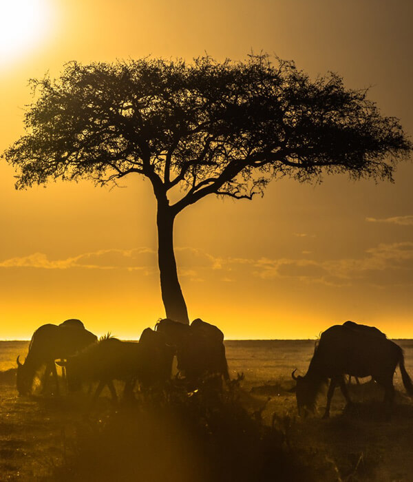 East African Destinations