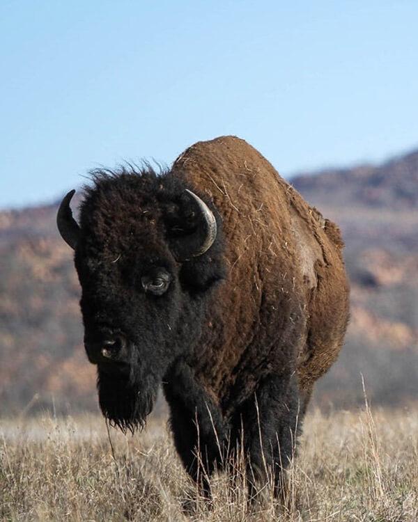 Buffalo Springs National Reserve