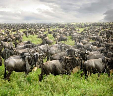 Kenya Migration Safari