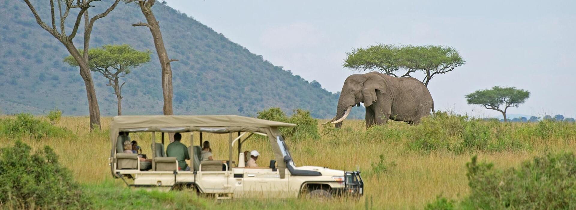 kenya safari tours, kenya tours, kenya safari, masai mara great migration