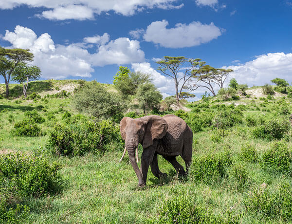 Incredible Tanzania