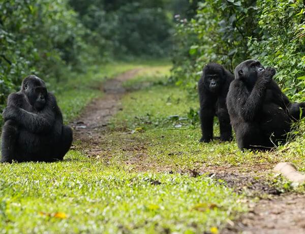 9 days rwanda gorilla trekking