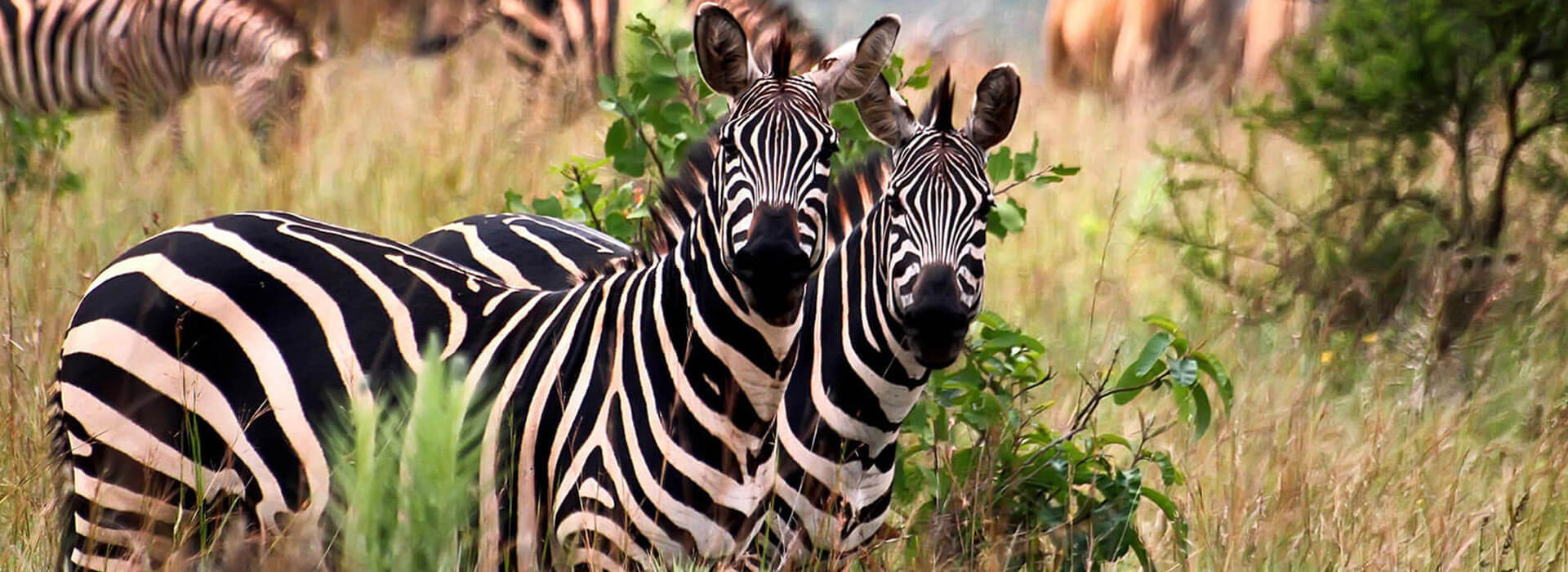 15 Days Best Of Uganda And Rwanda