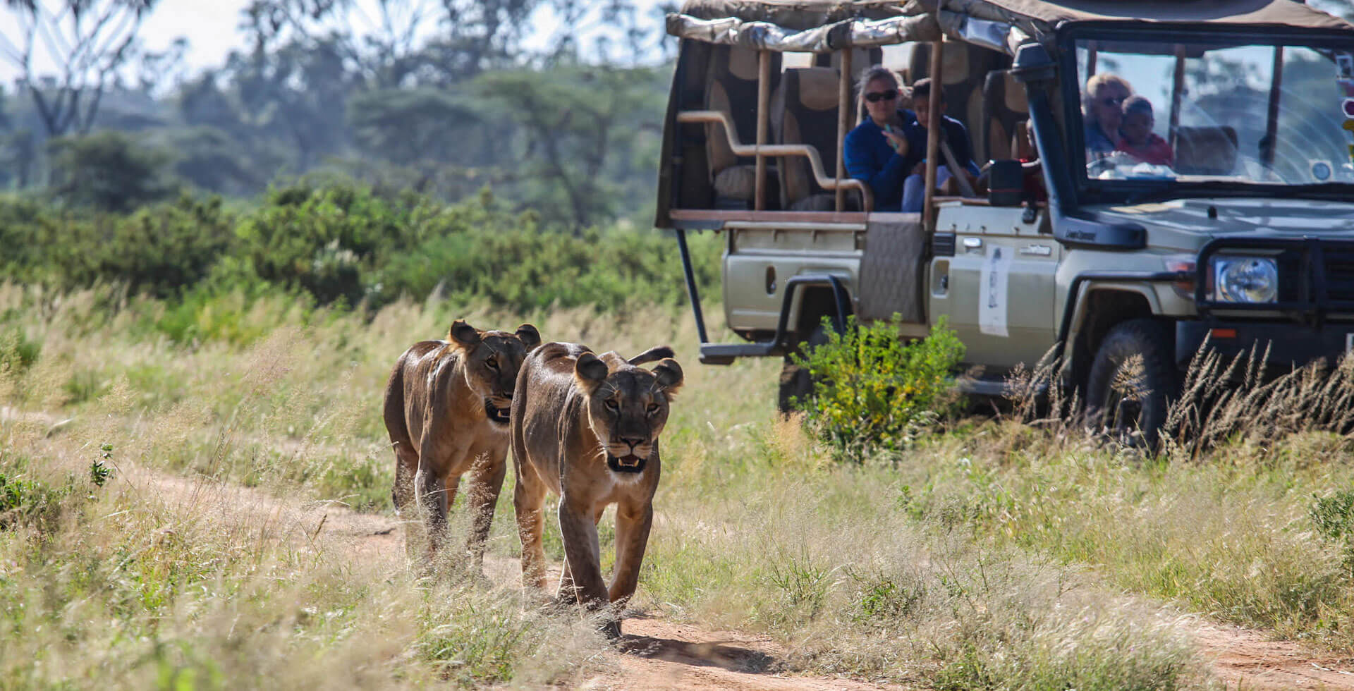 tanzania safari tours, tanzania tours, tanzania safari