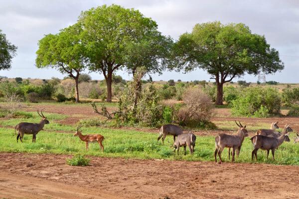 Tsavo East National Park
