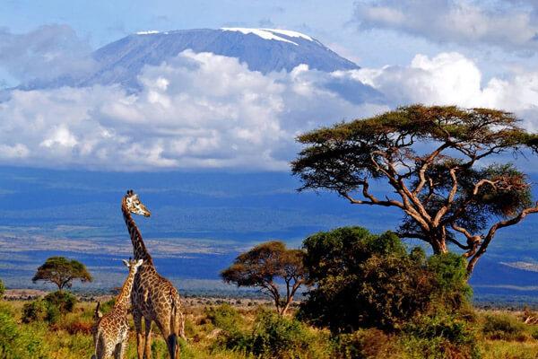 Mount Kilimanjaro National Park