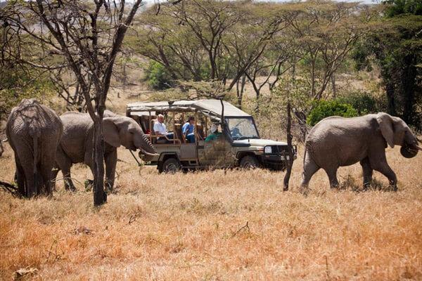 Kenya Safari Cost