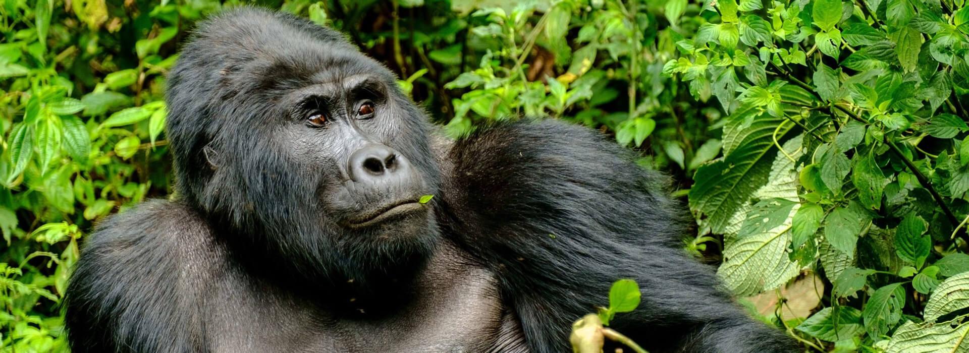 8 Days Impenetrable Bwindi Safari