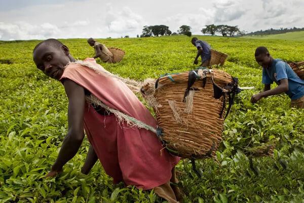 Best Time for Rwanda